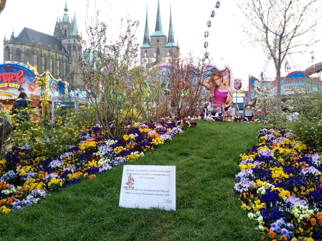 Erfurter Altstadtfrühling 2019 - Blumenbeet