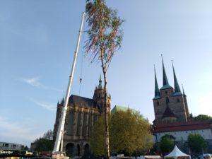 Das Maibaumsetzen Erfurt Domplatz 2019 - Erfurter Maibum zu Tanz in den Mai Erfurt