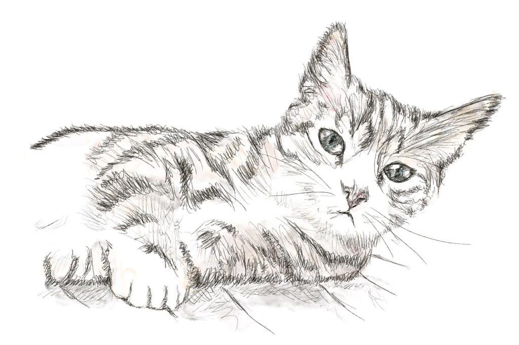 Katze Ausmalbild Erwachsene