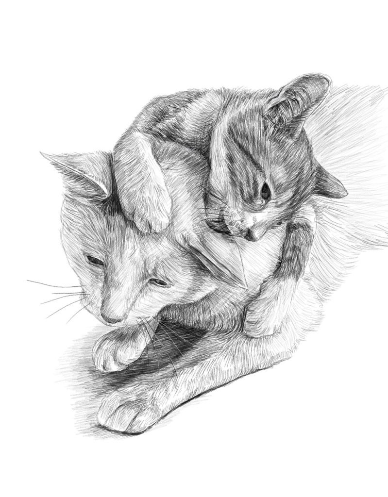 Katzen Ausmalbilder zum ausdrucken kostenlos - Malbuch Online kaufen