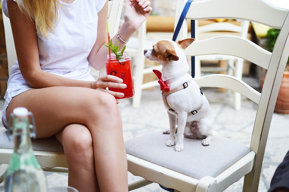 Geniale Wandtattoos mit Hunde als Motiv, Frau mit Chihuahua, Animal, Tier, Hund, Wandtattoo, Deko, Chiwawa