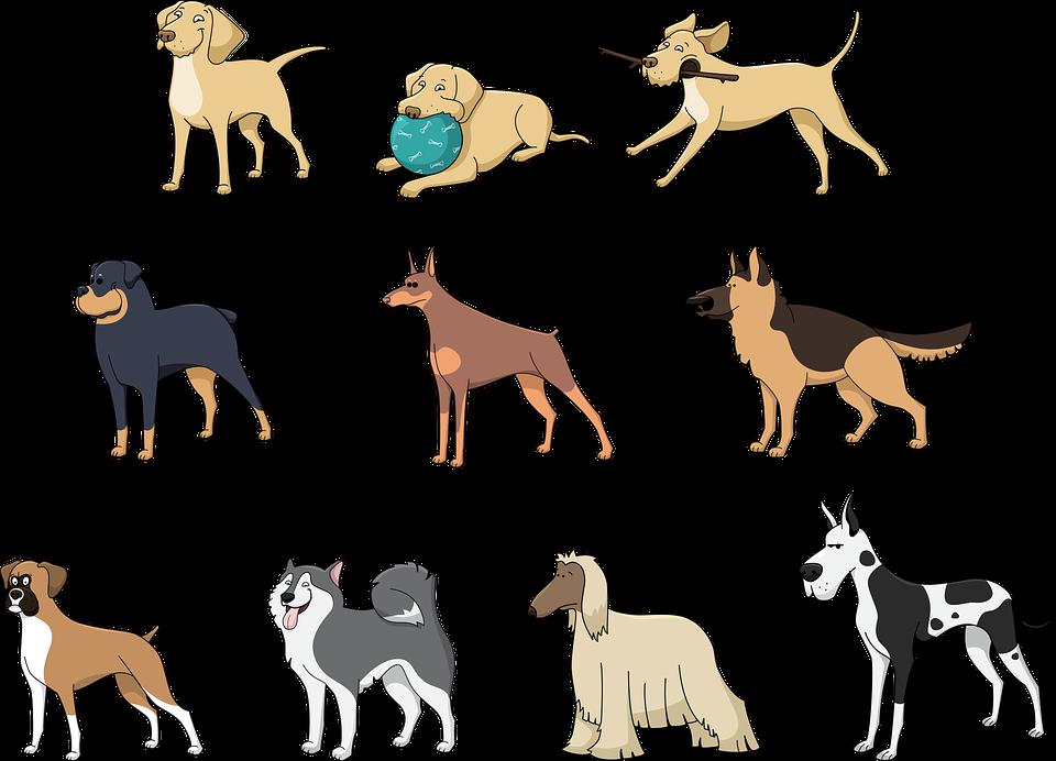Hunde Tasse