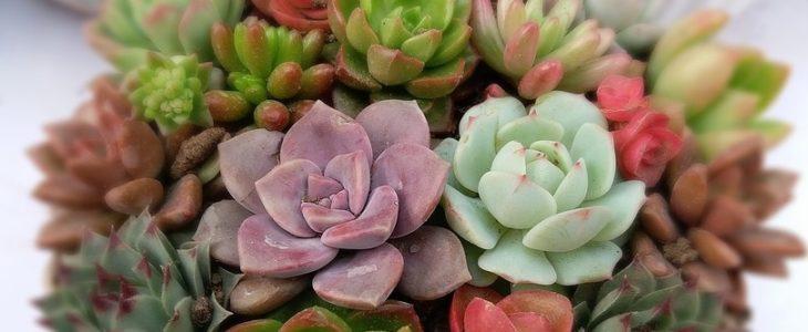 Sukkulenten im Topf kaufen, eine Sukkulente im Topf online bestellen, Succulent plants, Sukkulente im Topf, Töpfe
