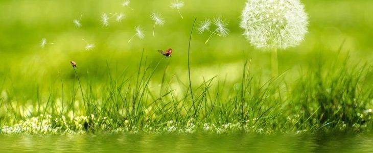 Unkraut im Rasen, Unkrautvernichter für Rasen, Mittel gegen Unkräuter